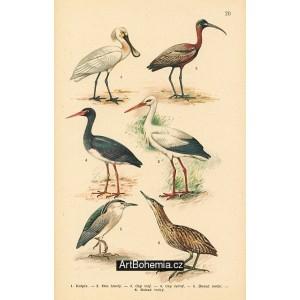Atlas ptáků 20
