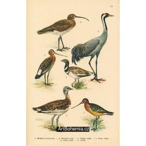 Atlas ptáků 19
