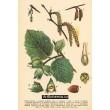 Atlas rostlin 1