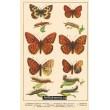 Atlas motýlů 6