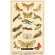 Atlas motýlů 11