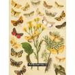 Setina, Lithosia, Gnophria, Emydia, Deiopeia... - Atlas motýlů st.Evropy, tab.22