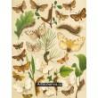 Laria, Leucoma, Porthesia, Psilura, Ocneria... - Atlas motýlů st.Evropy, tab.26