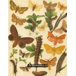 Bombyx, Crateronyx, Lasiocampa - Atlas motýlů střední Evropy, tab.27
