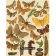 Bombyx, Lasiocampa, Endromis - Atlas motýlů střední Evropy, tab.28