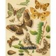 Saturnia, Aglia Tau, Stygia - Atlas motýlů střední Evropy, tab.29