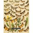 Bryophila, Dipthera, Agrotis, Panthea, Moma - Atlas motýlů st.Evropy, tab. 33