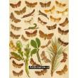 Taenioc., Panolis, Pachnob., Plastenis, Orthosia - Atlas motýlů st.Evropy,tab.38
