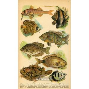 Atlas plazů, obojživelníků a ryb II