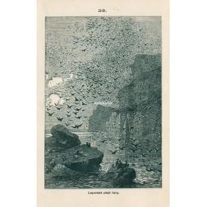 Laponské ptačí hory - Procházky přírodou XXVI