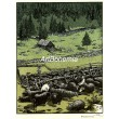 Dojenie oviec (Slovensko)