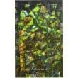 Kaligrafie rostlin